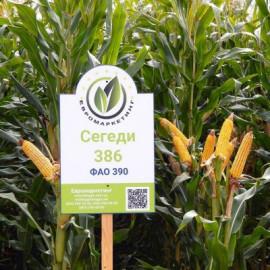 Семена кукурузы Сегеди 386, ФАО 390