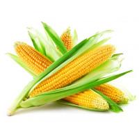 Семена кукурузы Жетон 265 МВ, ФАО 260