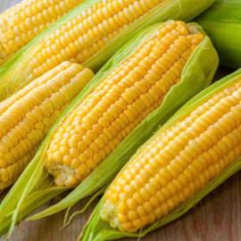 Насіння кукурудзи Любава, ФАО 270